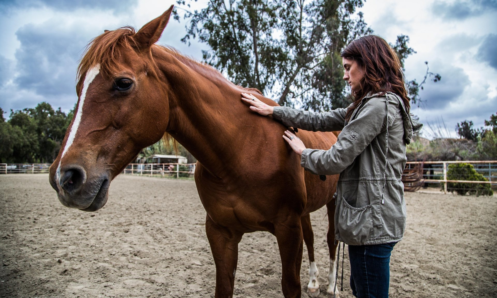 how to find a therapy horse